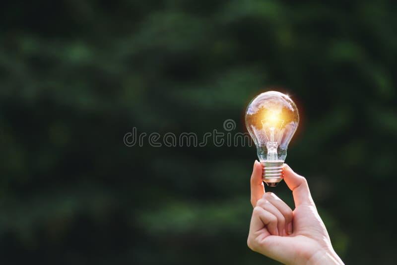 Ręka osoby mienia żarówka na natury tle dla słonecznego, energetycznym, pomysłu pojęcie fotografia royalty free