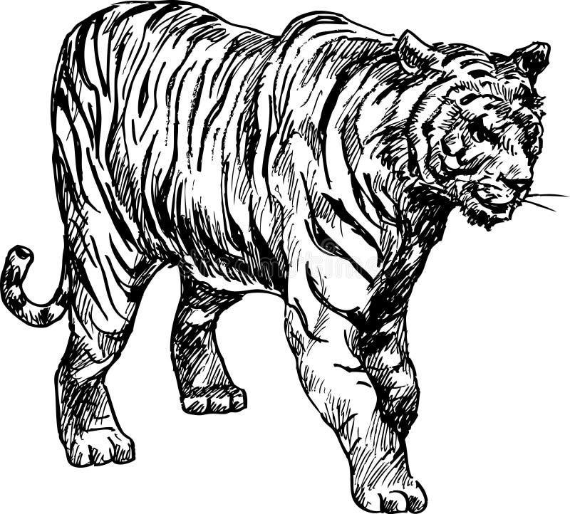 ręka patroszony tygrys ilustracji