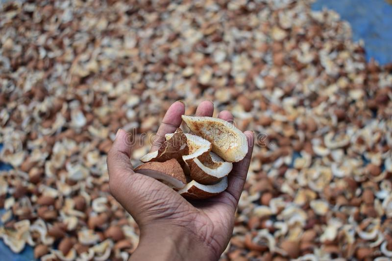 Ręka pełno wysuszeni kokosowi kawałki zdjęcia royalty free