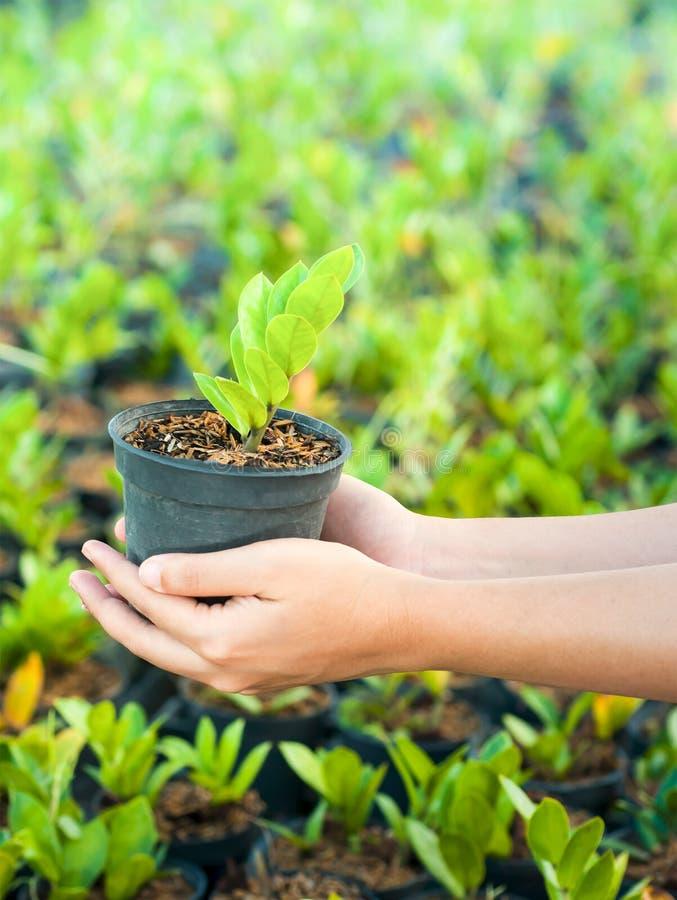 Ręka podnosi nowej rośliny obraz stock