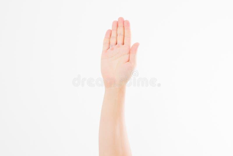 ręka pojedynczy white Głosować rękę Egzamin próbny Up kosmos kopii szablon blank obraz royalty free