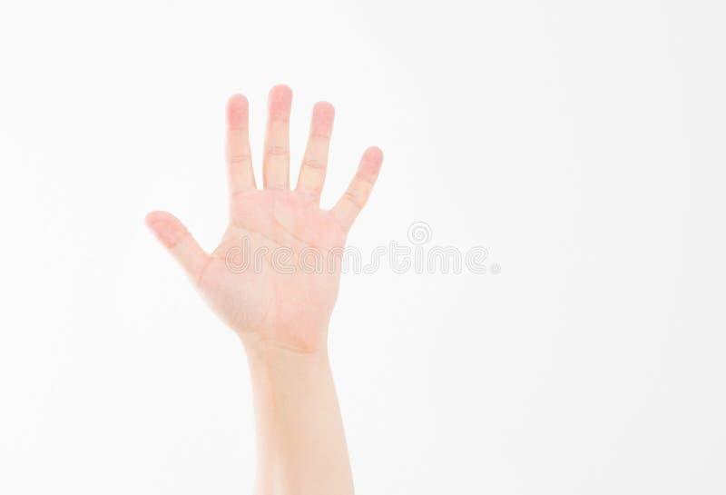 ręka pojedynczy white Głosować rękę Egzamin próbny Up kosmos kopii szablon blank obrazy stock