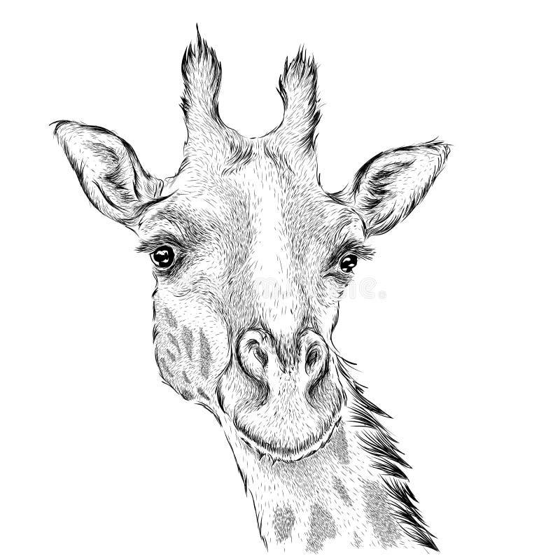 Ręka remisu żyrafy portret Ręka remisu wektoru ilustracja royalty ilustracja