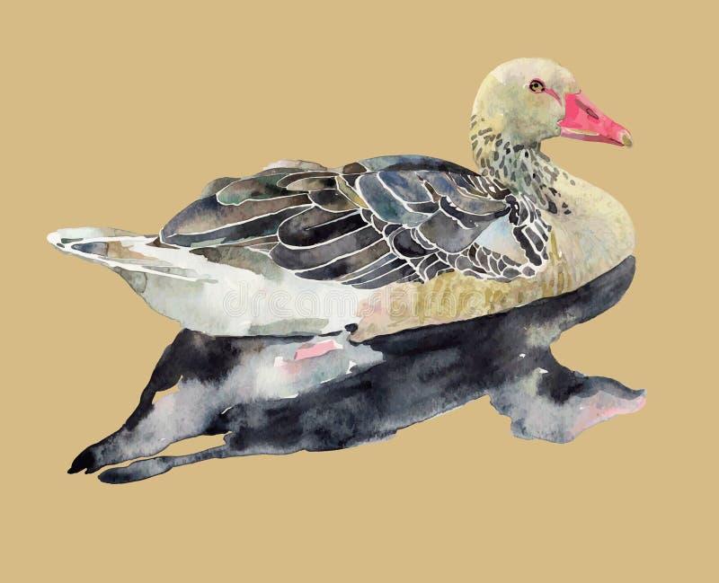 Ręka remisu akwareli ptak, kaczka ilustracji