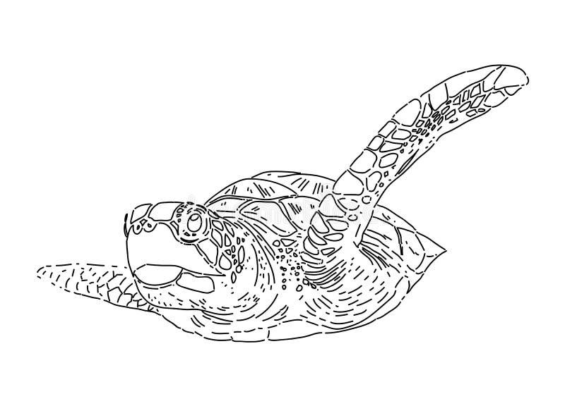 Ręka remisu denny żółw, wektor royalty ilustracja