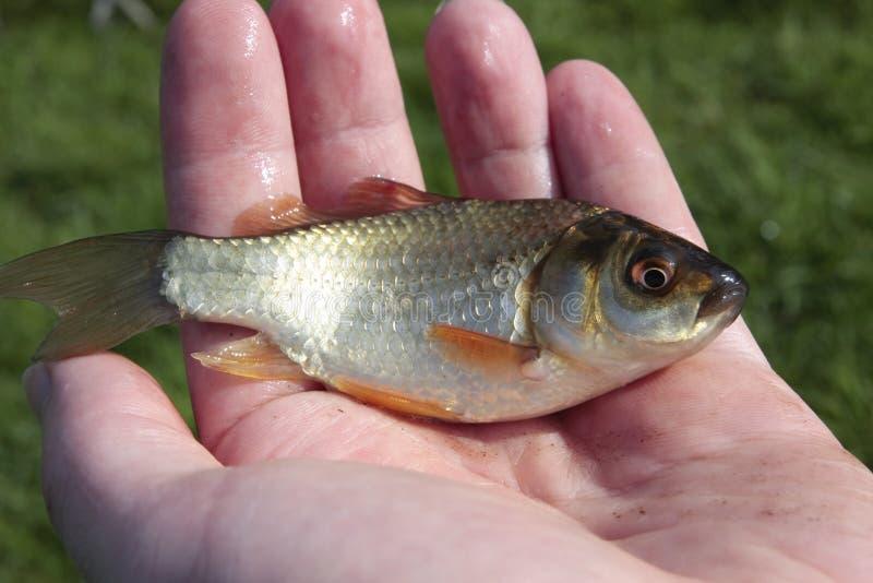 ręka ryb jest mały człowiek zdjęcia royalty free