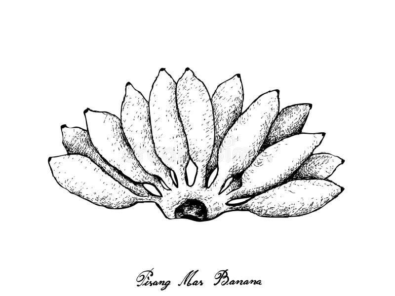 Ręka Rysująca Świeży Dojrzały Pisang Mas banan ilustracja wektor