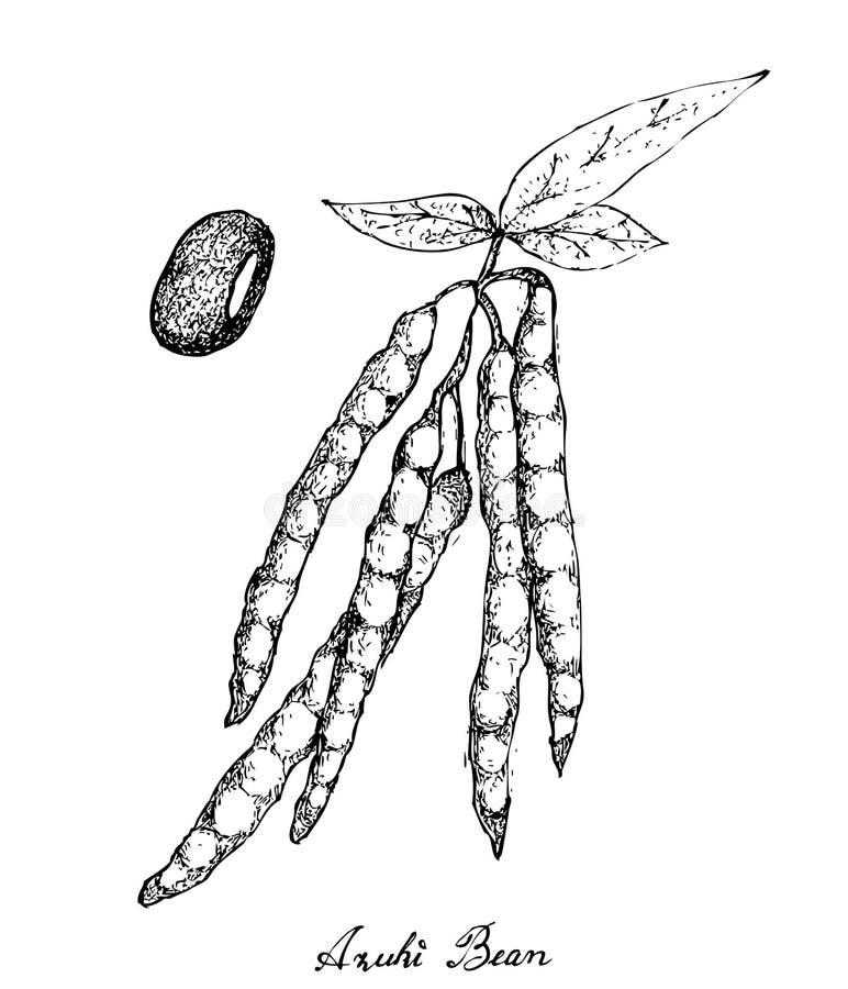 Ręka Rysująca Adzuki Bobowe rośliny na Białym tle ilustracji