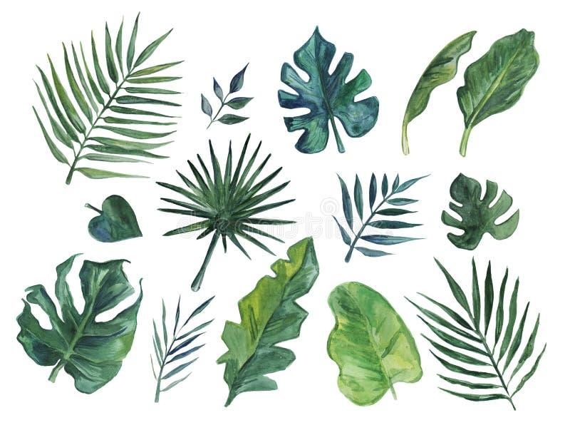 Ręka rysująca akwarela ustawiająca tropikalni liście ilustracja wektor