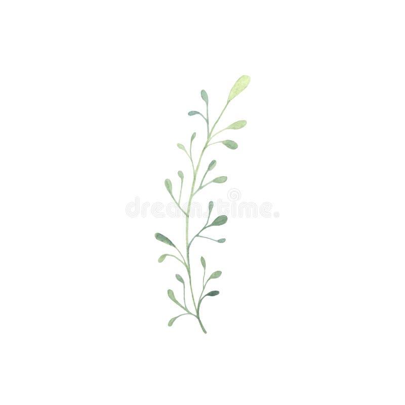 Ręka rysująca akwareli wiosny zieleni gałązka ilustracji