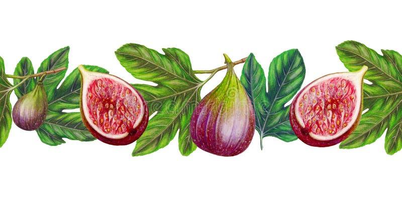 Ręka rysująca granica świeże figi, karmowa etykietka, owoc granica royalty ilustracja