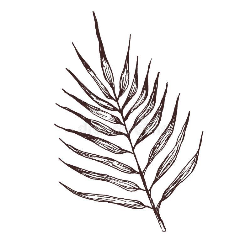 Ręka rysująca ilustracja palmowy liść dla wzoru, logo, szablonu, sztandaru, plakat?w, zaproszenia i kartki z pozdrowieniami proje ilustracja wektor