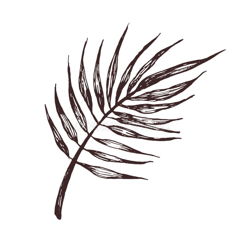 Ręka rysująca ilustracja palmowy liść dla wzoru, logo, szablonu, sztandaru, plakat?w, zaproszenia i kartki z pozdrowieniami proje ilustracji