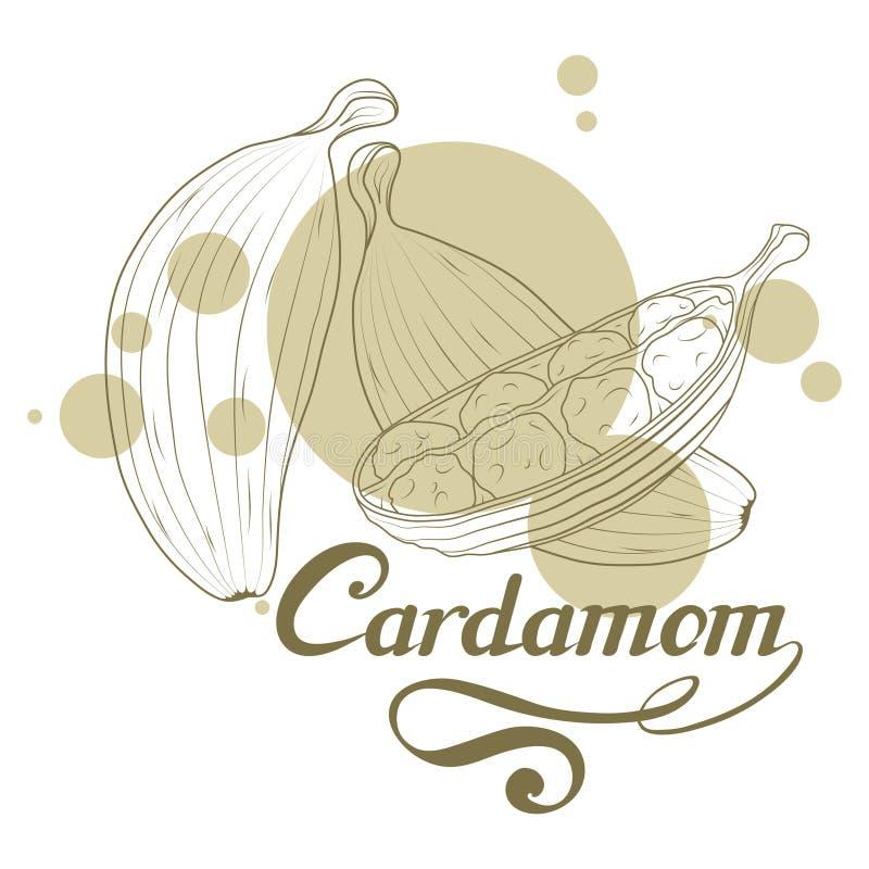 Ręka rysująca kardamon roślina, korzenny składnik, kardamonu logo, zdrowa żywność organiczna, pikantność kardamon odizolowywający ilustracja wektor