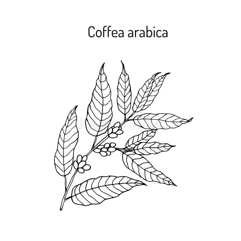 Ręka rysująca kawowa gałąź ilustracja wektor
