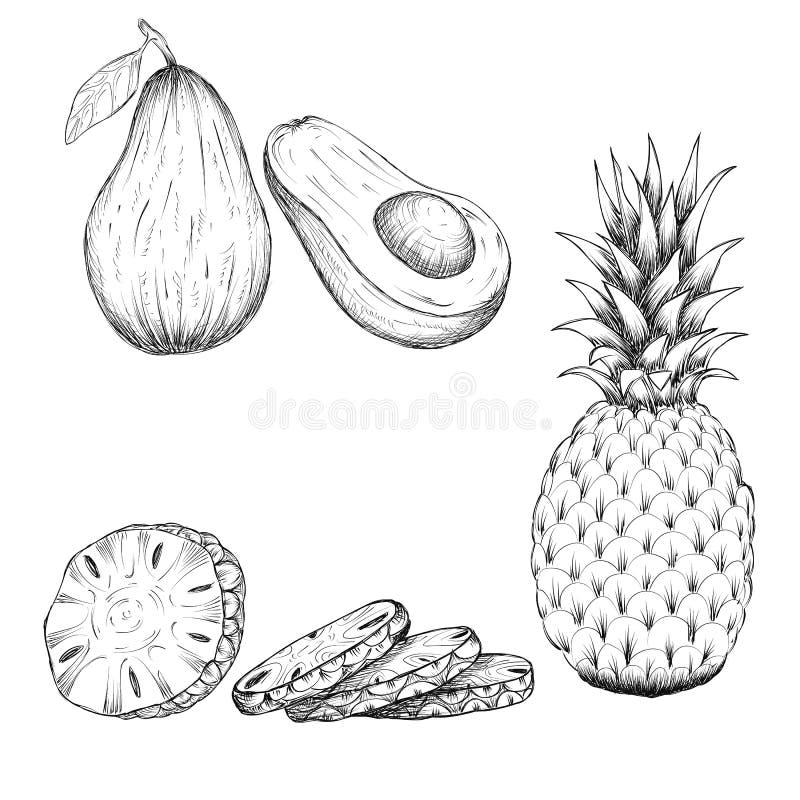 Ręka rysująca nakreślenie stylu ilustracja ananas i avocado tropikalnej owoc ilustracje na białym tle royalty ilustracja
