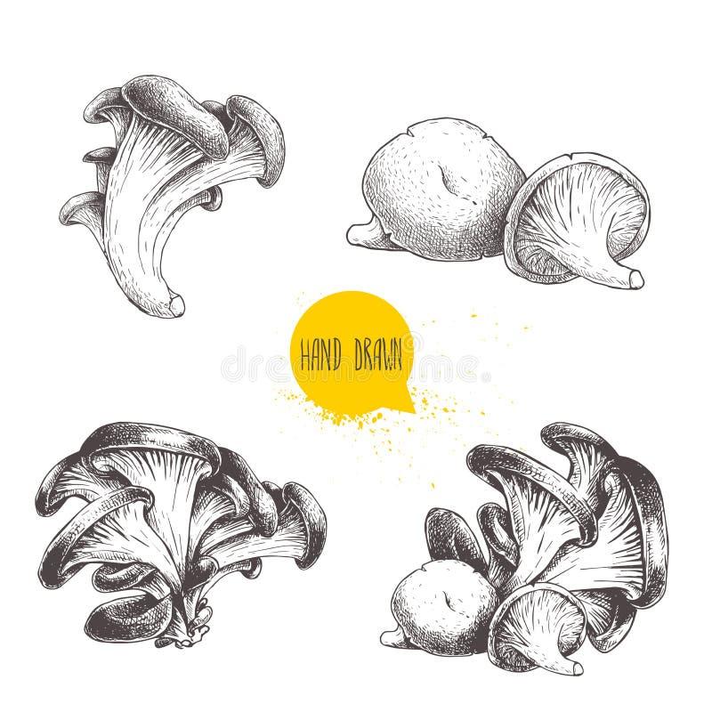 Ręka rysująca nakreślenie stylu ostrygowa pieczarka ustawia odosobnionego na białym tle Świeży lasowy jedzenie ilustracja wektor