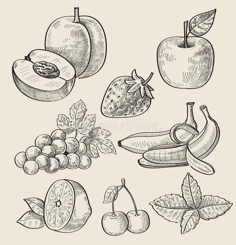 Ręka rysująca owoc royalty ilustracja