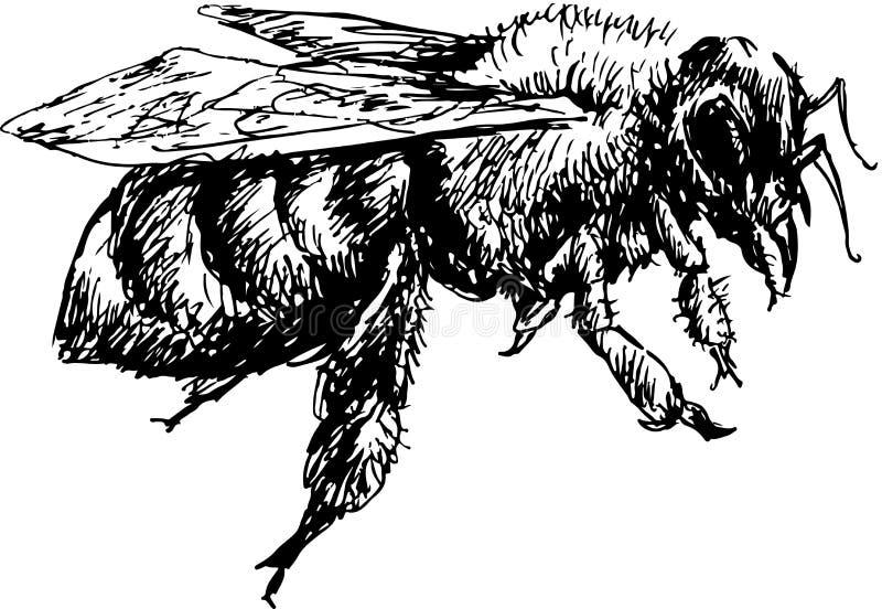 Ręka rysująca pszczoła ilustracja wektor