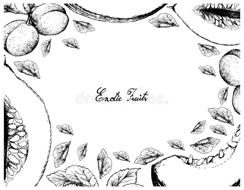 Ręka Rysująca rama Casaba melonu i europejczyk śliwki owoc ilustracji