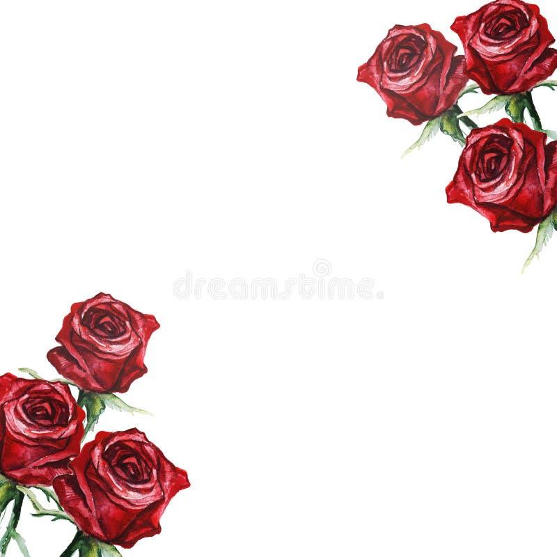 Ręka rysująca rama z akwareli czerwonymi różami ilustracji