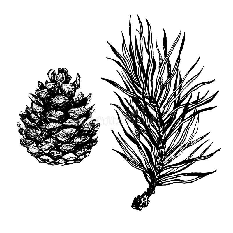 Ręka rysująca sosny gałąź ilustracja wektor