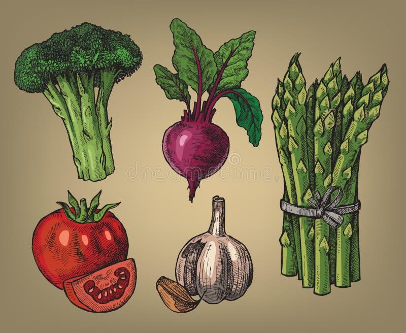 Ręka rysująca warzywa royalty ilustracja