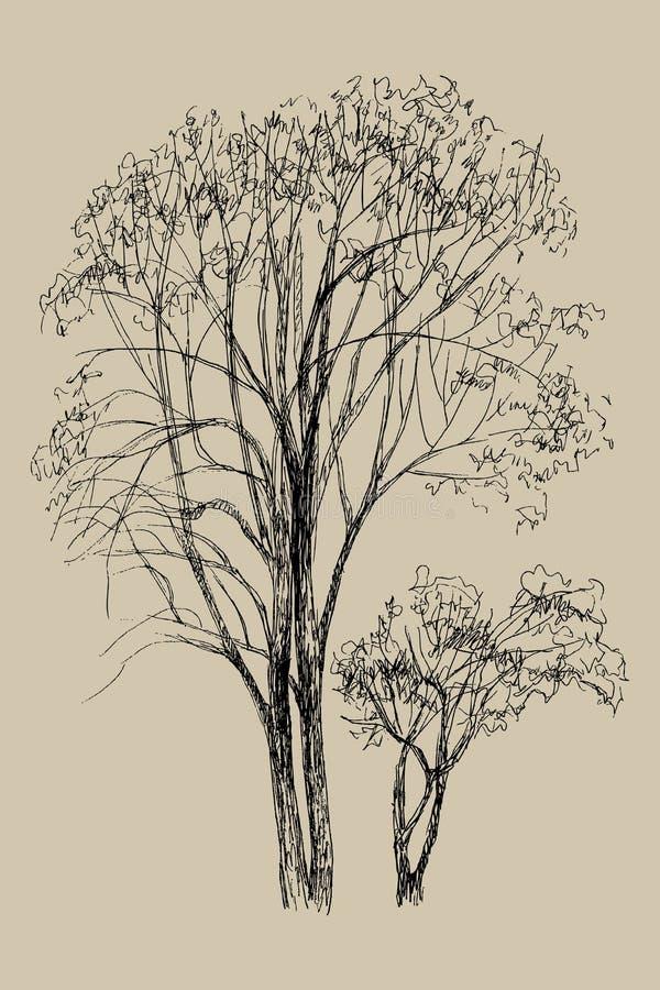 Ręka rysująca wektorowa ilustracja dwa drzewo Odosobniona ilustracja grawerujący styl styl retro Botaniczny nakreślenie ilustracja wektor