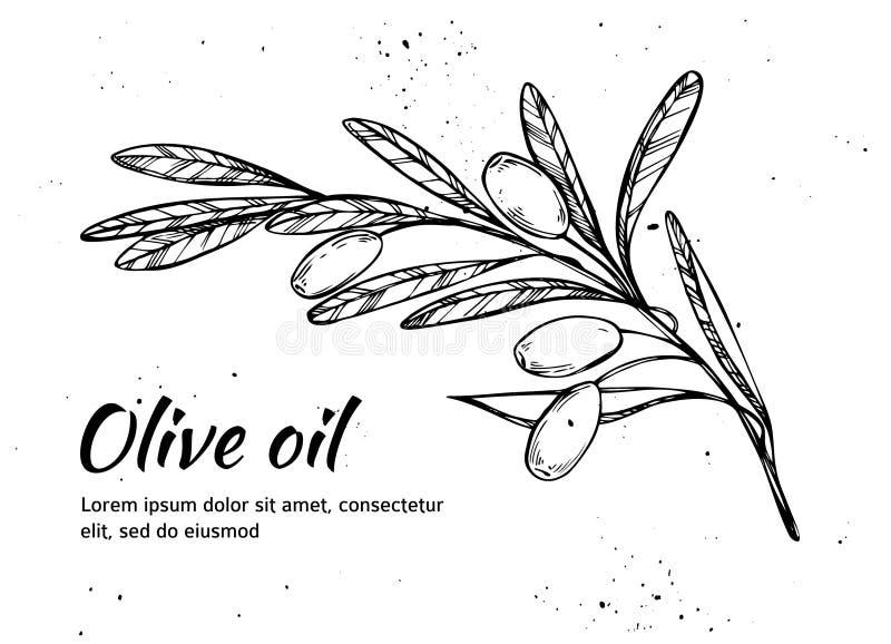 Ręka rysująca wektorowa ilustracja - gałązka oliwna piękna butelka ubierać nafciane oliwne pikantność Rocznik ilustracji