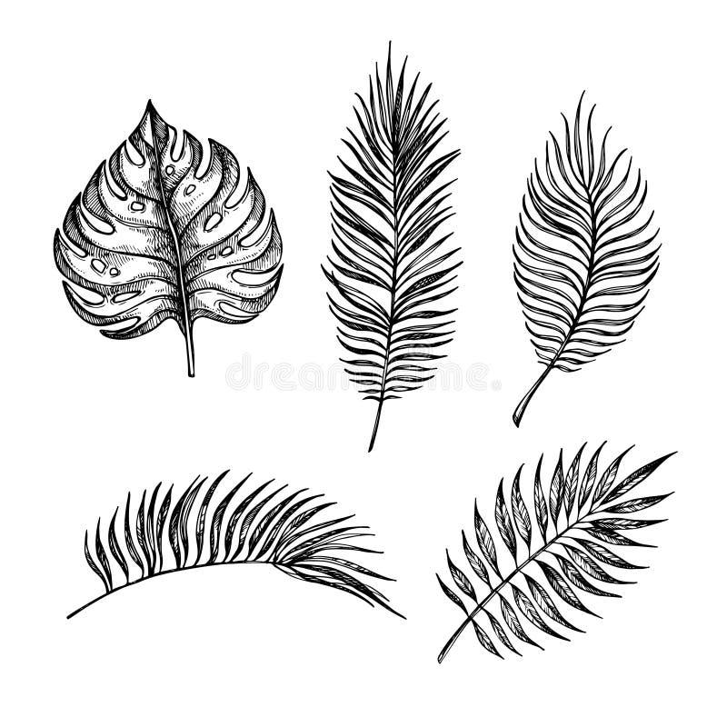 Ręka rysująca wektorowa ilustracja - palma liście Tropikalny projekt el ilustracja wektor