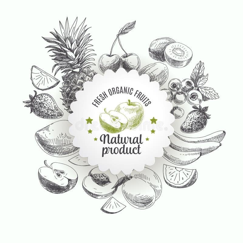 Download Ręka Rysująca Wektorowa Ilustracja Z Owoc I Ilustracja Wektor - Ilustracja złożonej z grafika, żywienioniowy: 57674666