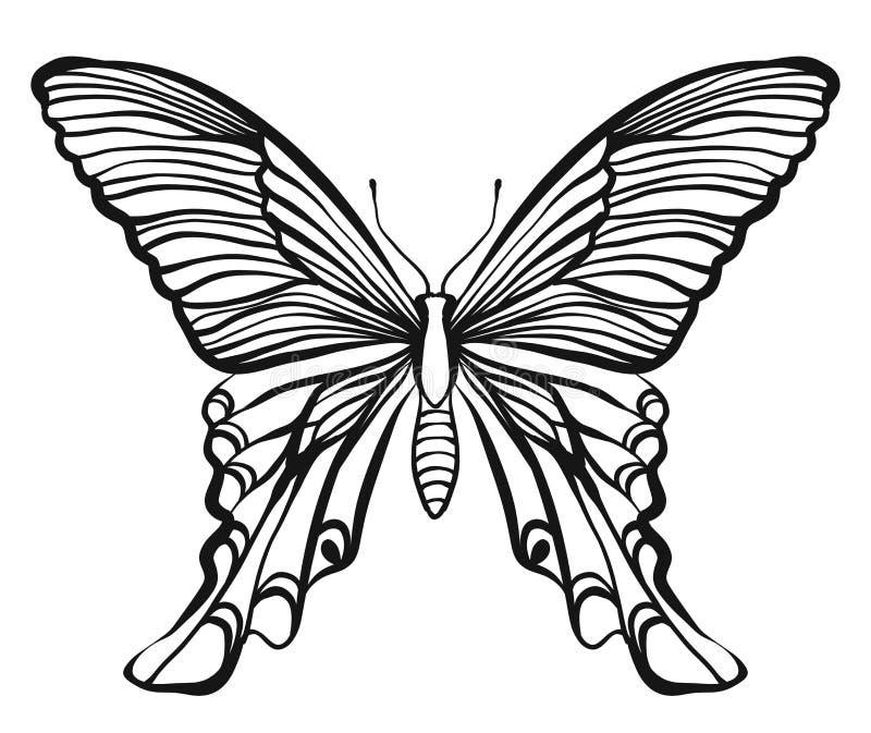 Ręka rysująca wektorowa motylia ilustracja ilustracja wektor