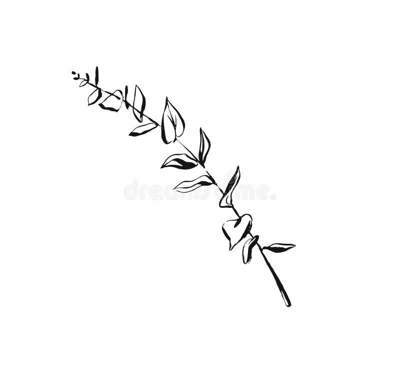 Ręka rysująca wektorowy abstrakcjonistyczny artystyczny atrament textured graficzna nakreślenie rysunku ilustracja eukaliptus gał ilustracja wektor