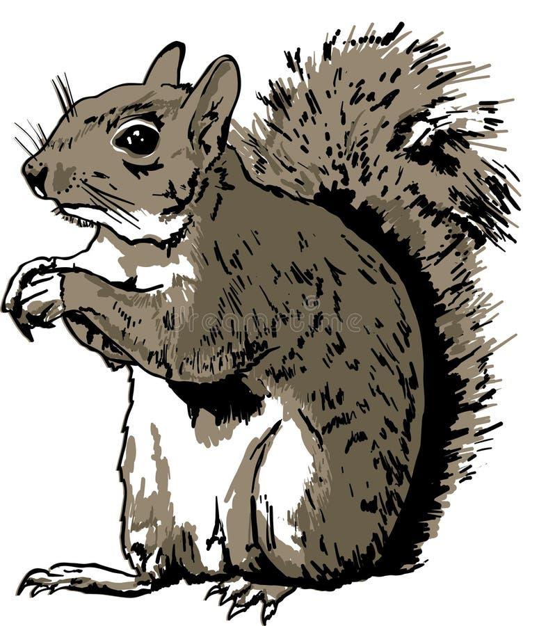 Ręka Rysująca wiewiórka fotografia royalty free