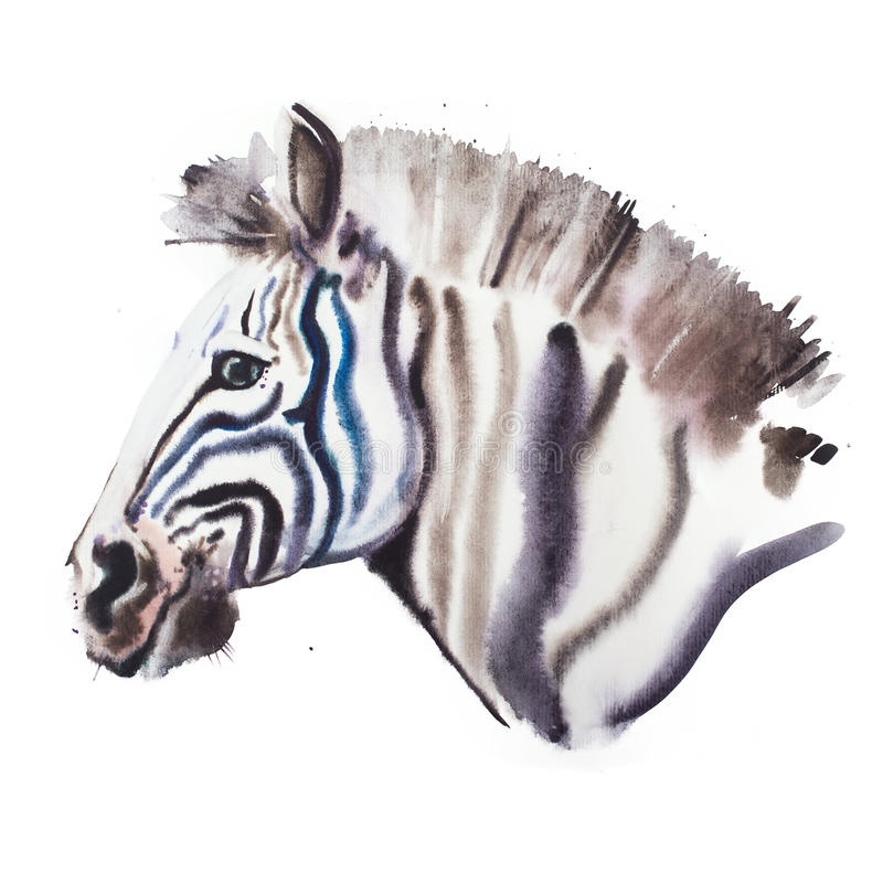 Ręka rysujący akwarela ilustracyjny portret zebra royalty ilustracja