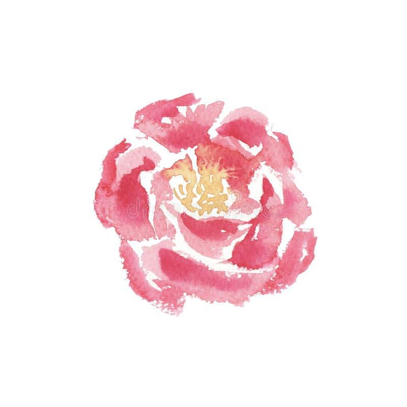ręka rysujący akwarela odizolowywający peonia kwiat ilustracji
