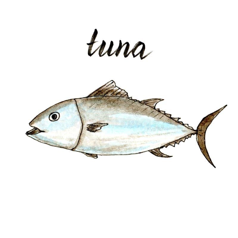 Ręka rysujący akwarela odosobniony tuńczyk royalty ilustracja