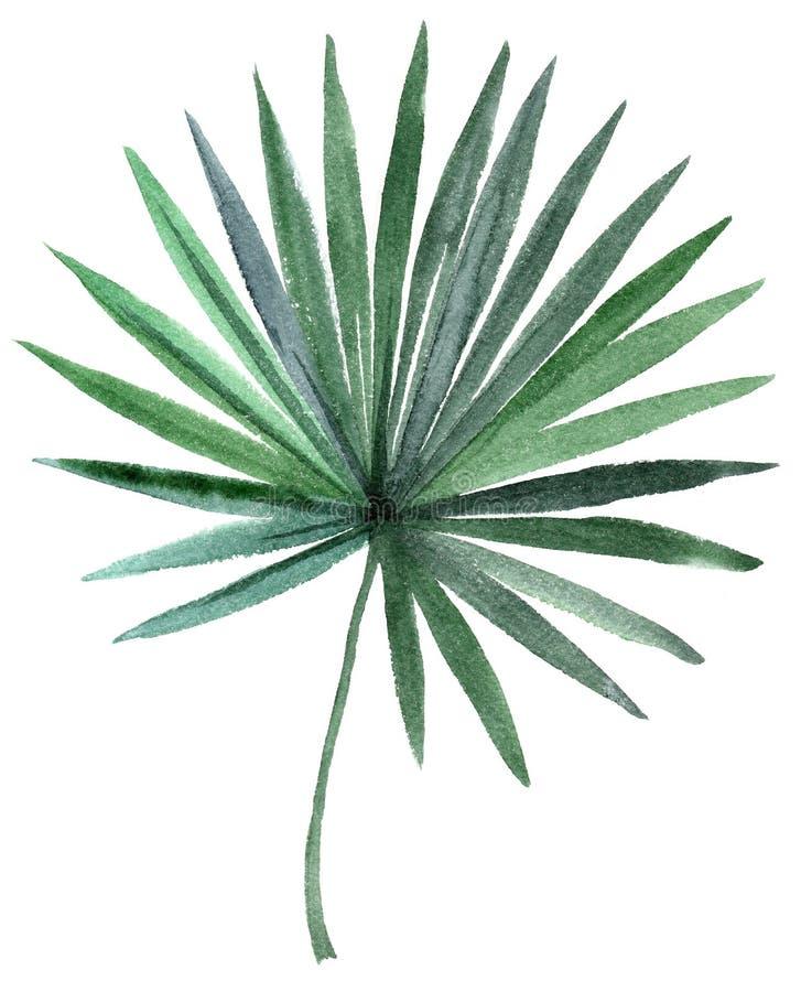 Ręka rysujący akwareli drzewka palmowego liść ilustracji