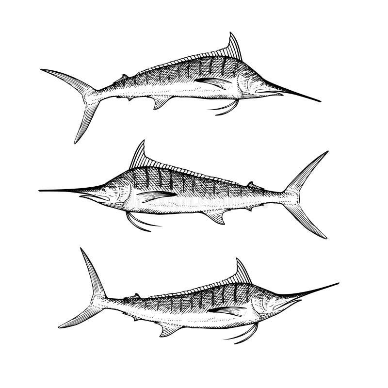 Ręka Rysujący Błękitny Marlin ilustracji