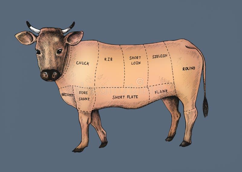 Ręka rysujący cięcie wołowina ilustracja wektor