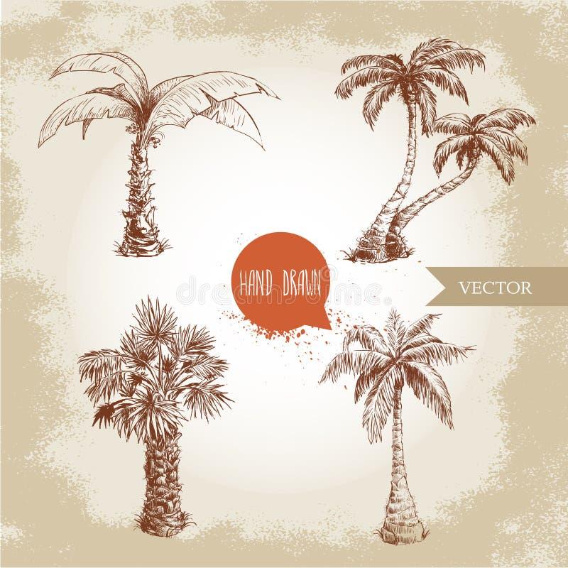 Ręka rysujący coco drzewek palmowych nakreślenia set royalty ilustracja