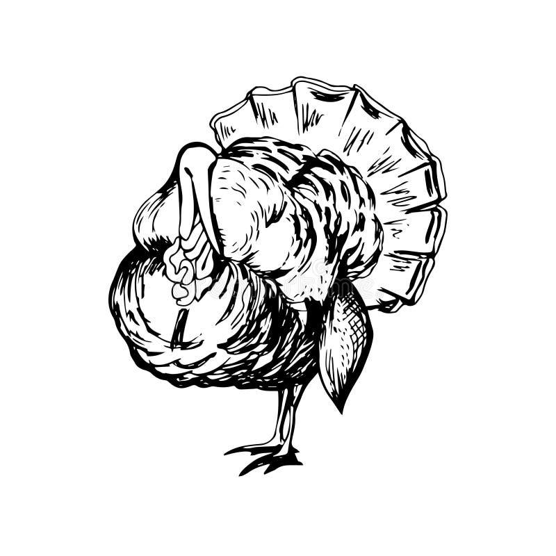 Ręka rysujący czarny i biały indyk royalty ilustracja