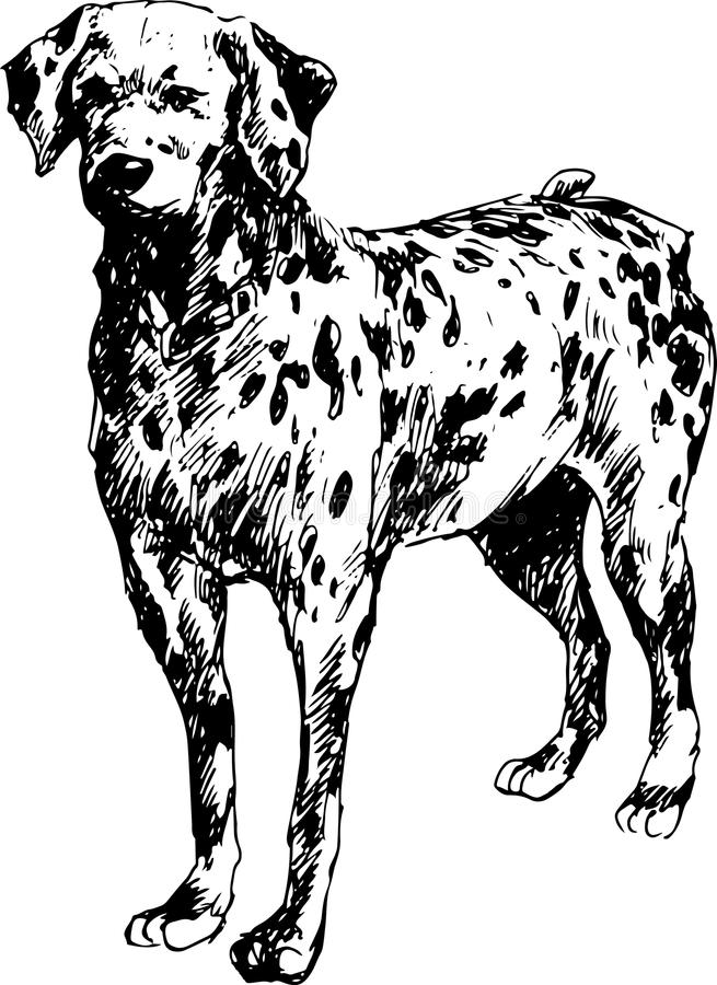 Ręka rysujący dalmatian pies royalty ilustracja