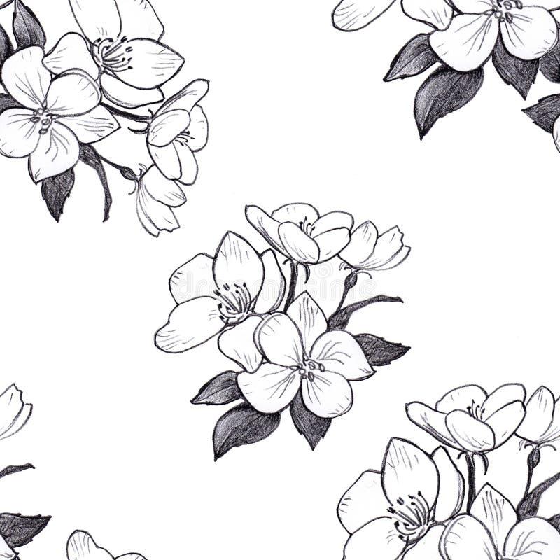 Ręka rysujący deseniowy bezszwowy jabłko kwitnie na białym tle royalty ilustracja