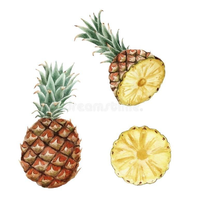 Ręka rysujący dojrzały akwarela ananas odizolowywający royalty ilustracja