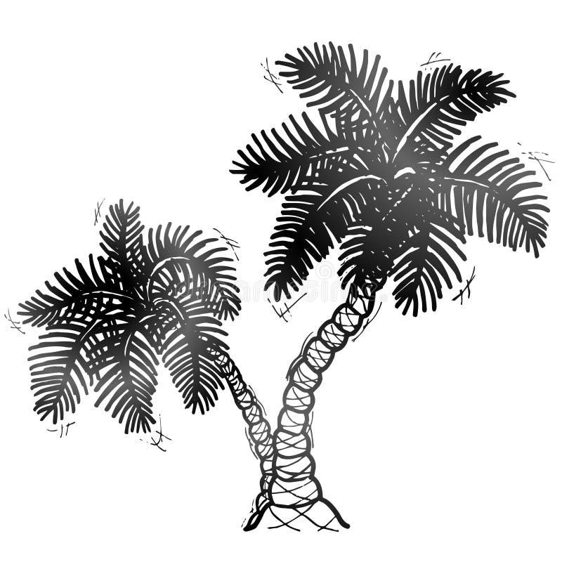 Ręka rysujący drzewko palmowe ilustracja wektor