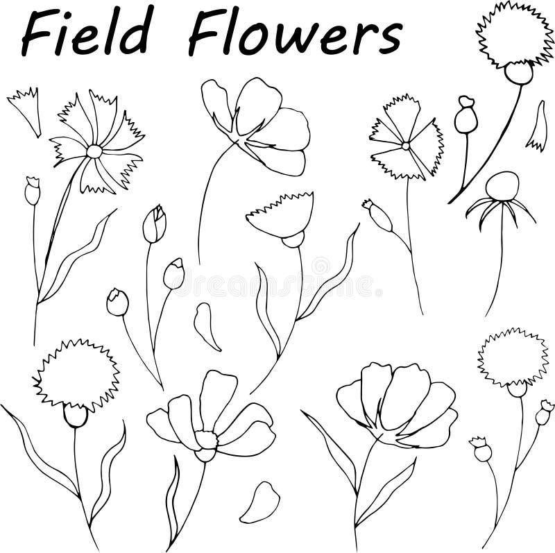 Ręka rysujący dzicy siano kwiaty również zwrócić corel ilustracji wektora ilustracja wektor