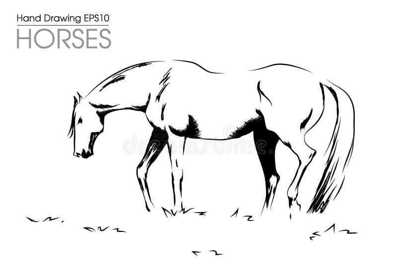 Ręka rysujący ilustracyjny od koń na łące royalty ilustracja