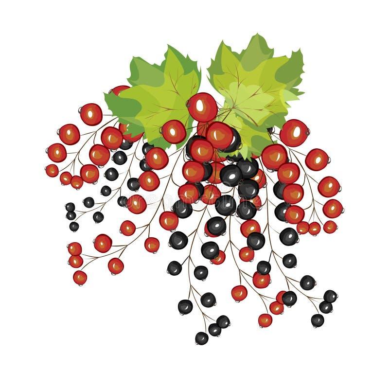 Ręka rysujący jagody czerni czerwonego rodzynku zakończenie up ilustracji