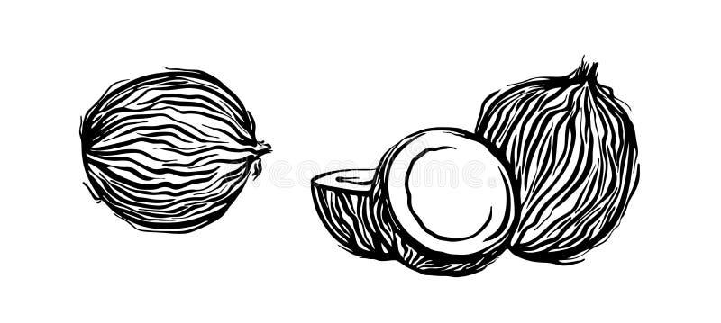 Ręka rysujący kokosowy konturu nakreślenie Wektorowego czarnego atramentu coco rysunkowy set Graficzna ilustracja, odizolowywając ilustracja wektor